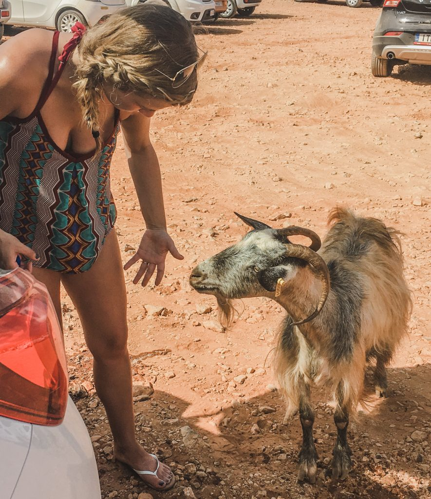 me talking to a billy goat