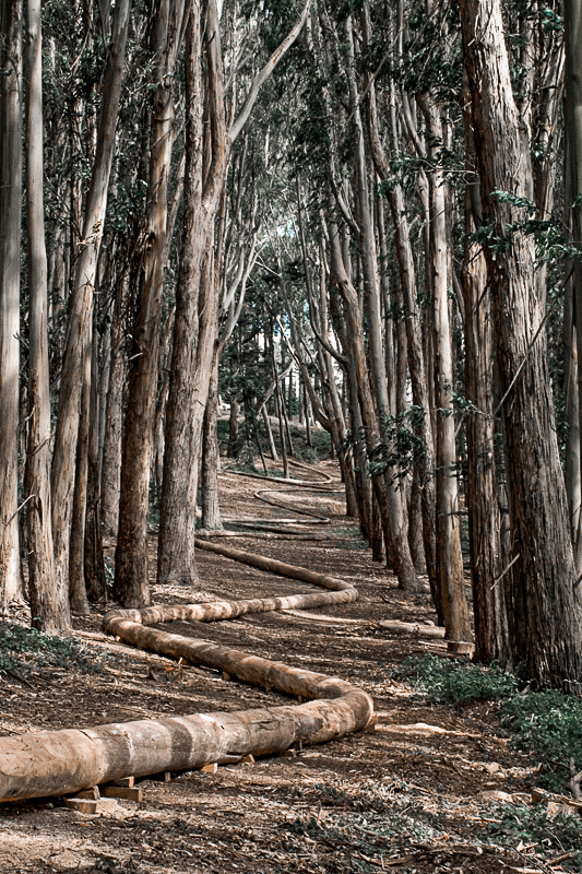 wood lined path at lover's lane