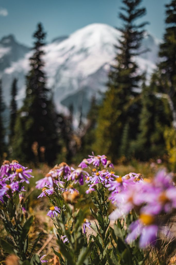 wildflowers in the front of mount rainier
